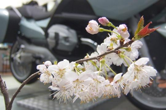 春近し。2.jpg